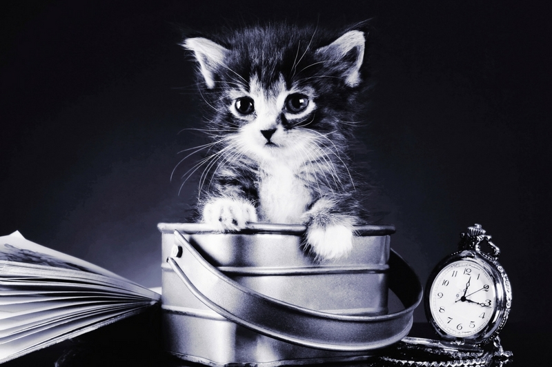 black and white cat in a small tin bucket